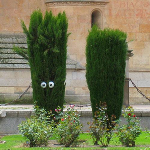 Eyeball Bush