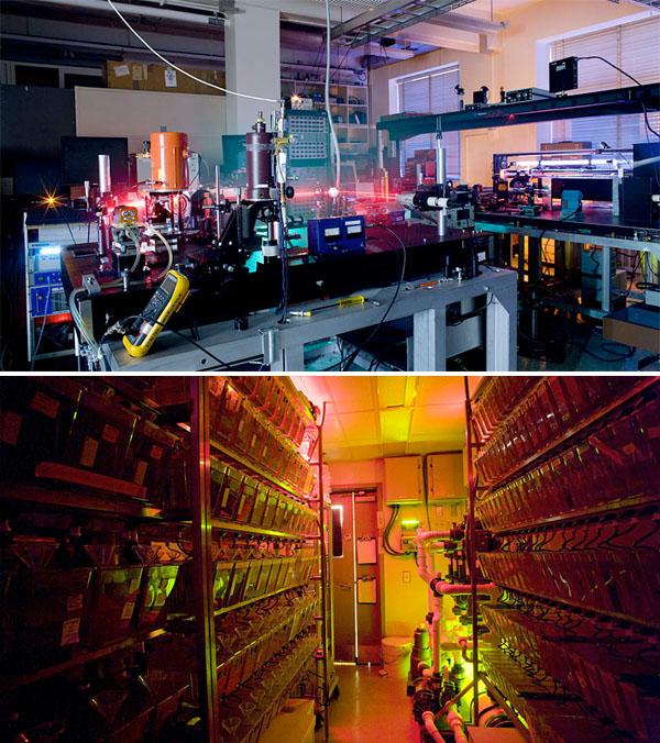 Labs-At-Night