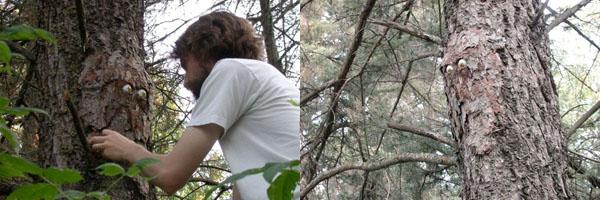 Treeeyes 2-Up