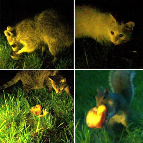 Animals At Night-4-Up