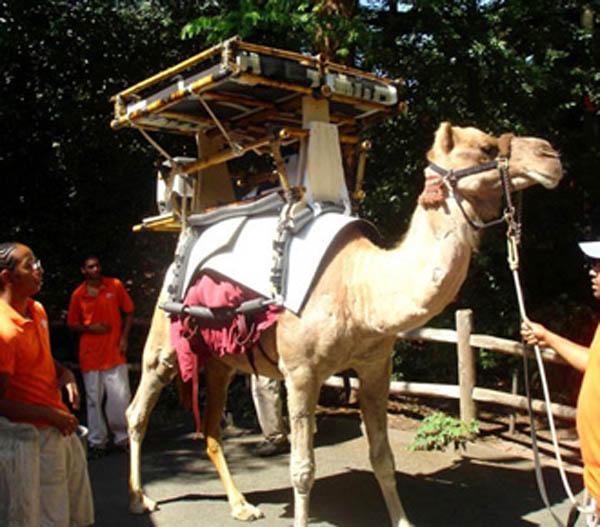 camelSolar100908.jpg