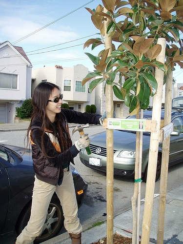 treeplantingsf.jpg
