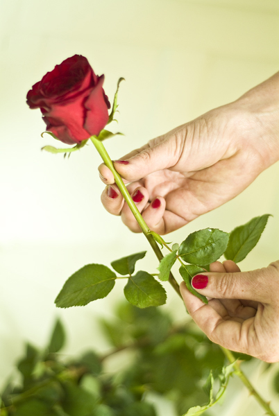 flowerprep_001.jpg