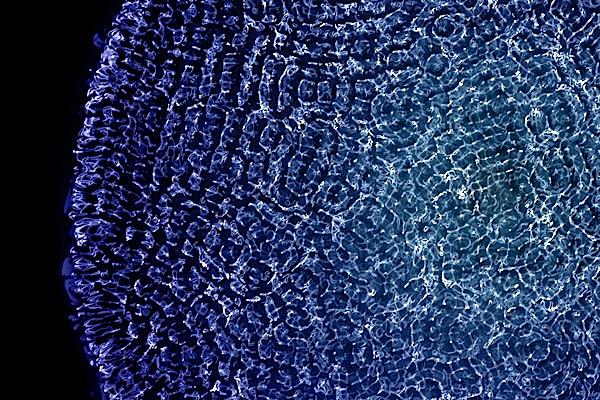 cymaticsDotOrg1_cc.jpg