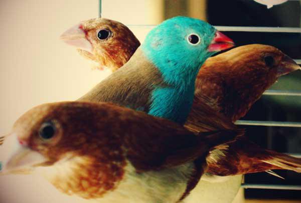Susie Birds