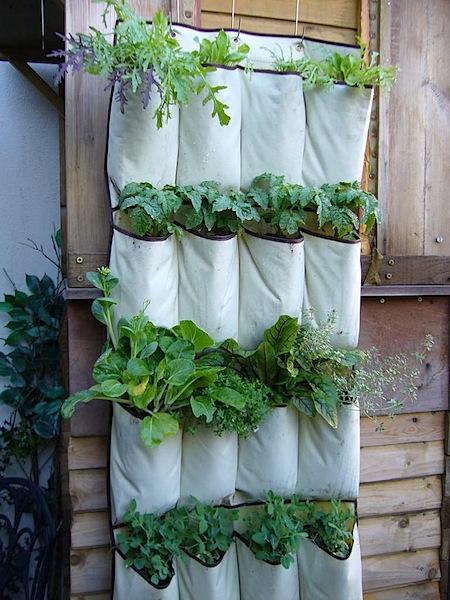 verticalveggiegarden.jpg