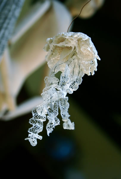 doiley_lace_jellyfish.jpg
