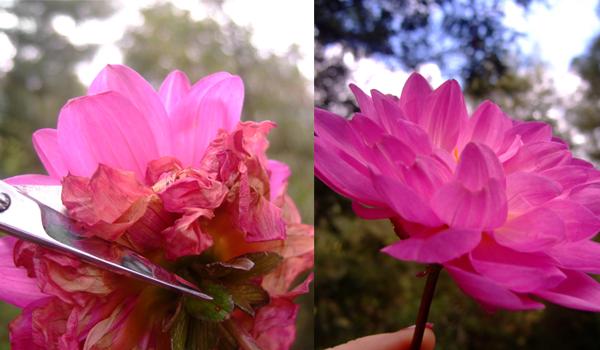 flower_tile.jpg