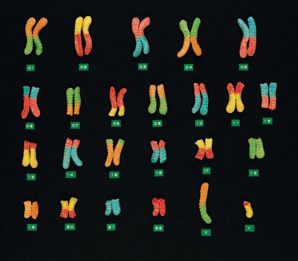 gummi_chromosomes.jpg