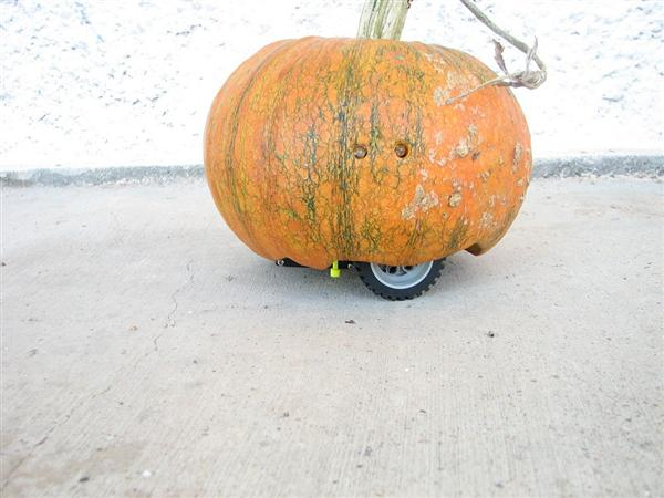 rovin_pumpkin_01.jpg