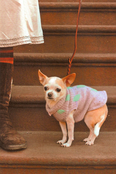 appliqueyourway_dogsweater.jpg