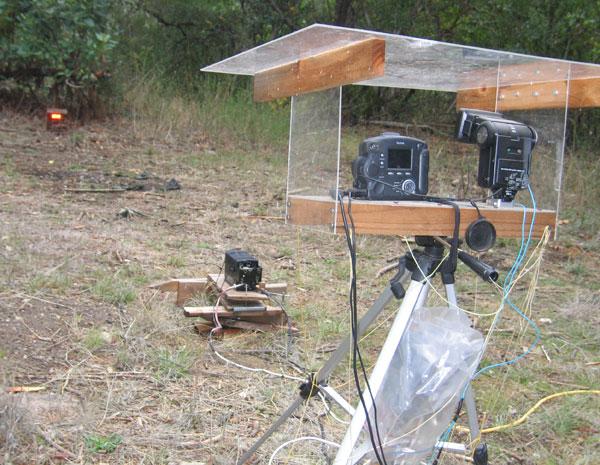flashback-wildlife-camera-setup2.jpg