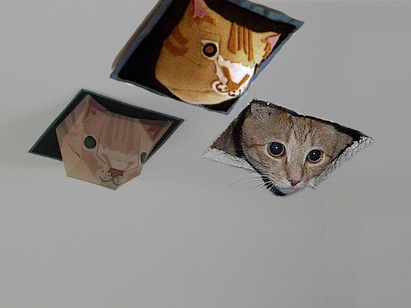 threeceilingcats.jpg