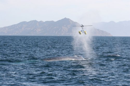 whale-helicopter.jpg