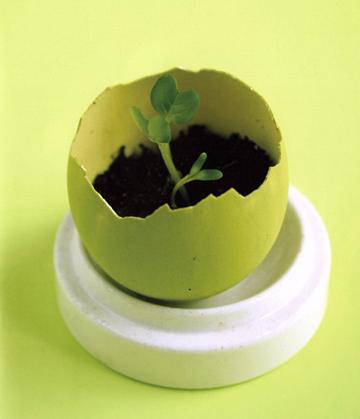 eggshell_seed_starter.jpg