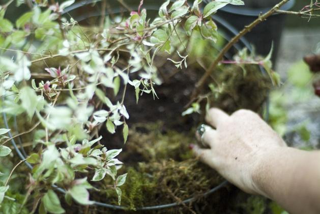 hanging_planter_0013.jpg