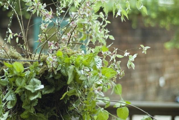 hanging_planter_0018.jpg