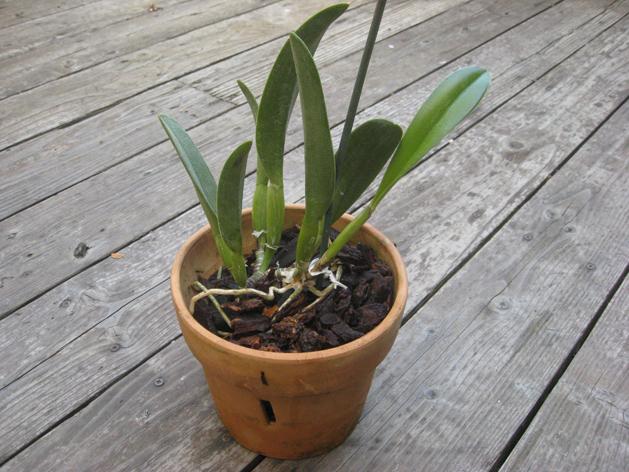 orchidrepot2.jpg