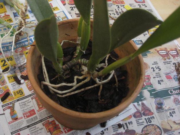 orchidrepot3.jpg