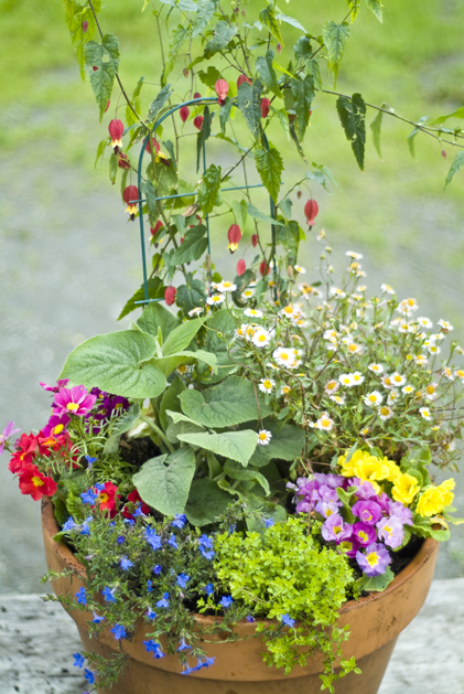 potting_plants_31.jpg