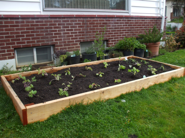 Build your own raised garden bed make if youve ever wanted to try building a raised bed for vegetables herbs flowers or anything else you want to grow it can be as simple as this pared down solutioingenieria Gallery