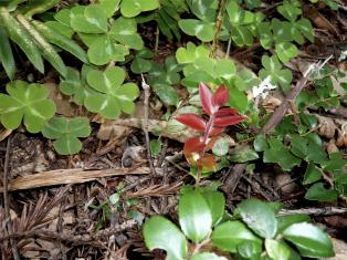 redplantsmall.jpg
