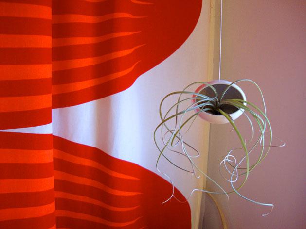 dorm_decor_succulent.jpg