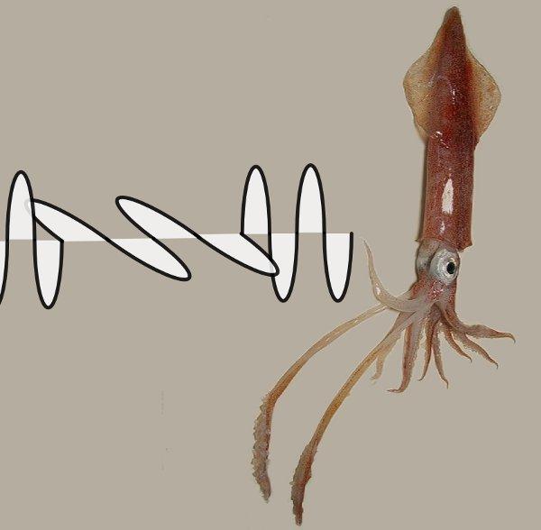 squid_secret_message.jpg