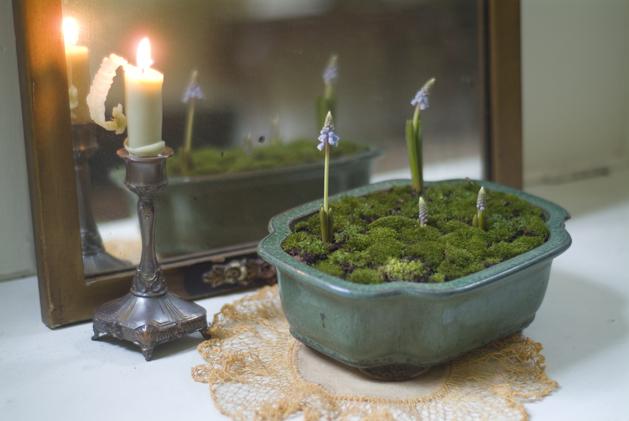 woodlandtest-candle.jpg