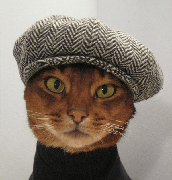 cat_hat_model.png