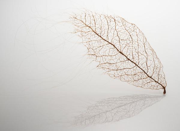 hairy-leaves-1.jpg