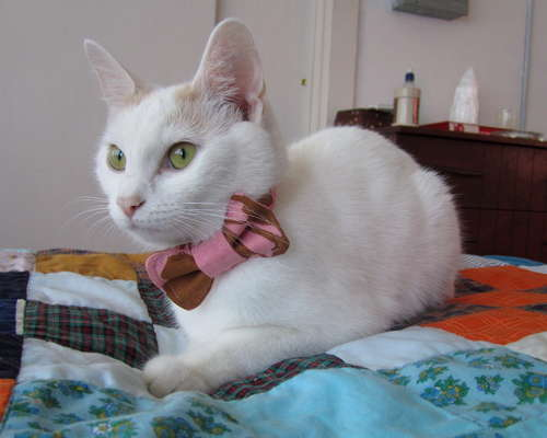 how_to_cat_bowtie.jpg