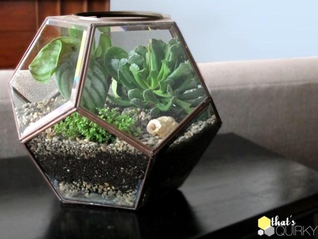 succulent_terrarium.jpg