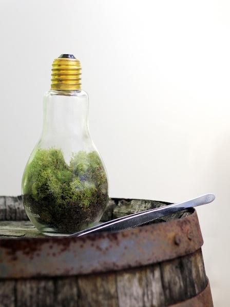 01_craft_kit_gg_twig_bright_idea_terrarium