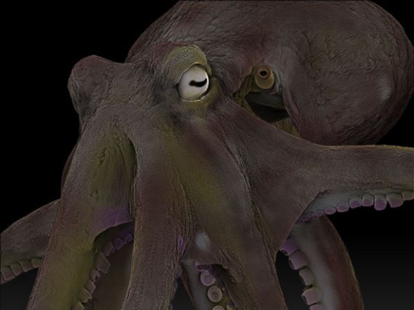 octopus-close-up