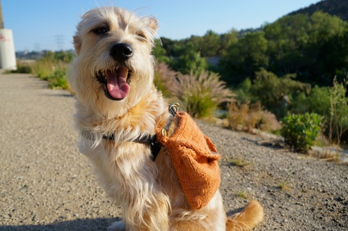 How-To: Knitted Adventure Dog Backpack | Make:
