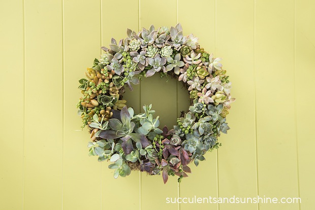 succulents-and-sunshine-Living-Wreath-with-Succulents