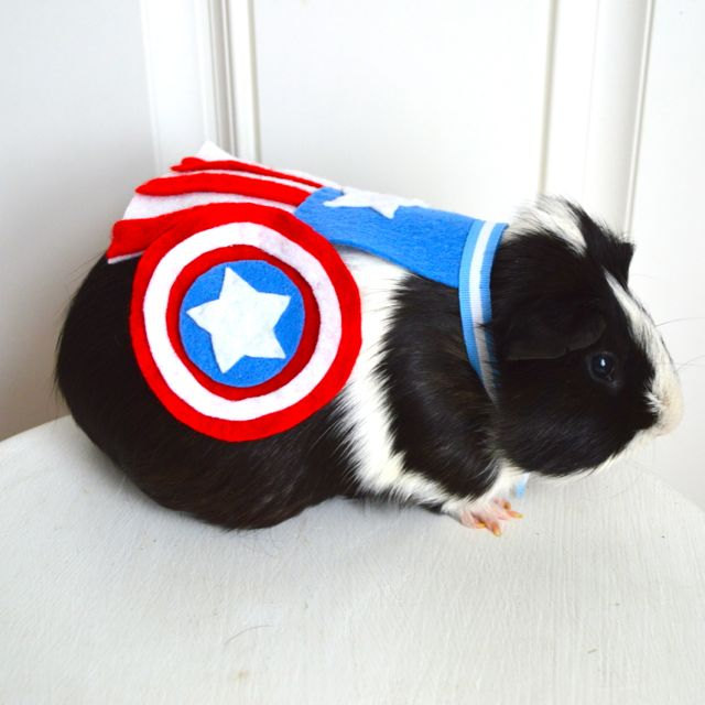guinea-pig-costume-1