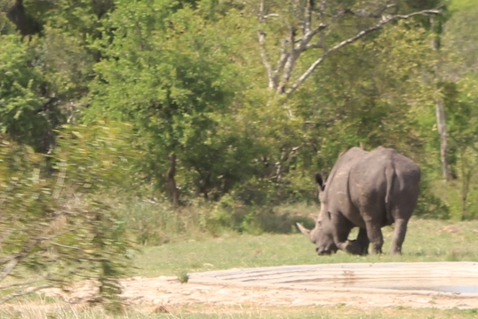 Rhino spotted in the African bush
