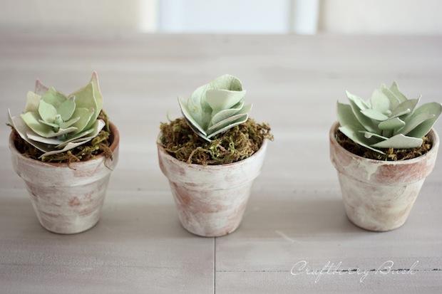 craftberrybush_paper_succulents_01