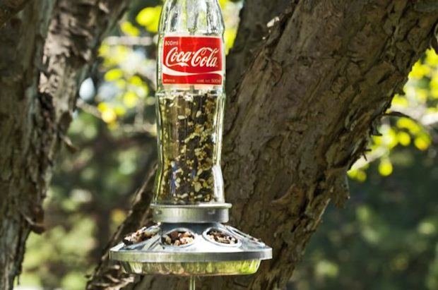 birdsandblooms_soda_bottle_bird_feeder_01