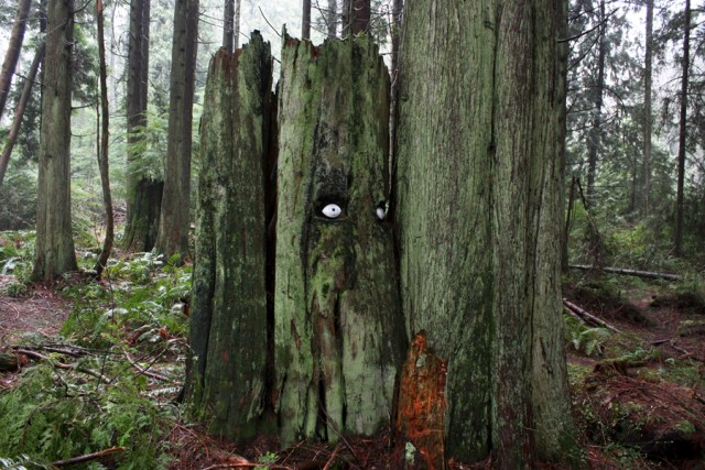 forest-sentinels-1