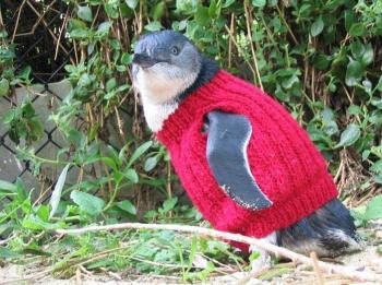 Knitted-penguin-jumper-2