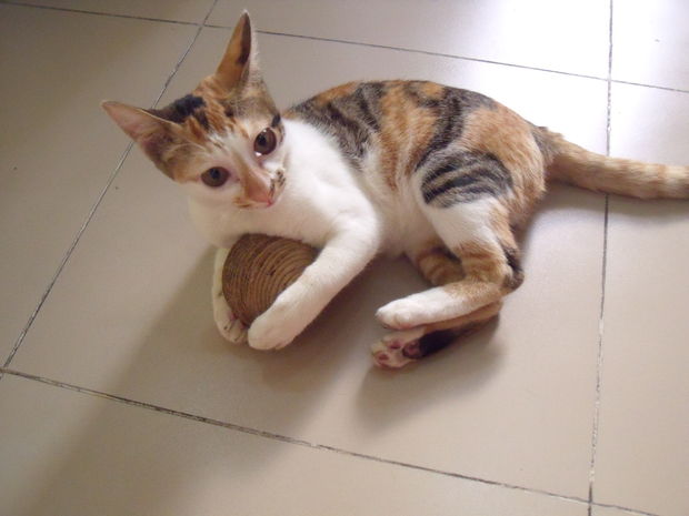 carboard-cat-toy-2