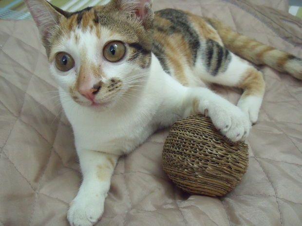 cardboard-cat-ball-1