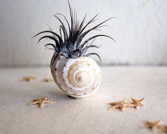 sea-urchin-planters-2