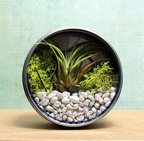 04_airplant_terrarium_magnet_flickr_roundup