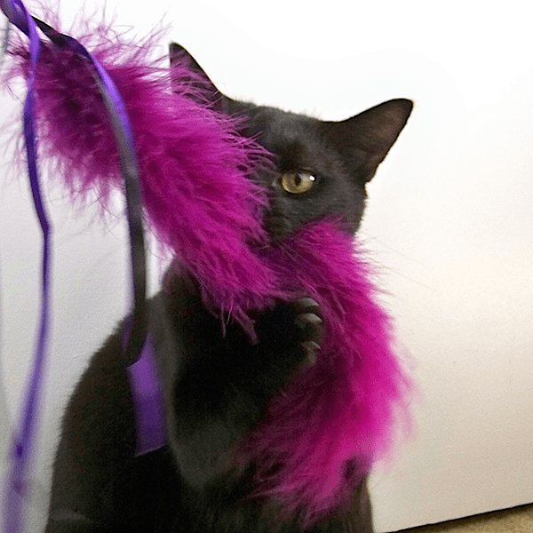 dreamalittlebigger_feather_cat_toy_01