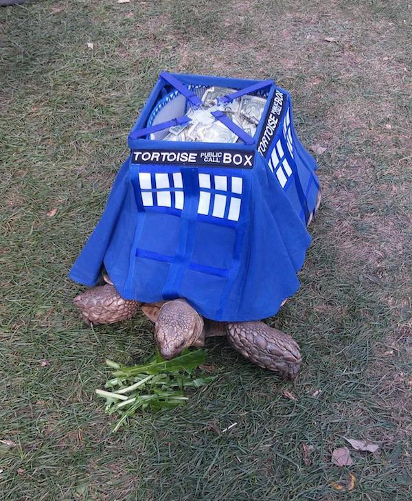 tortoise-tardis-1
