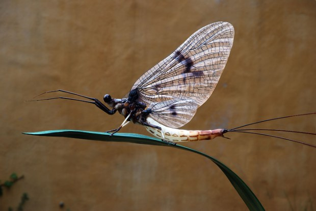Mayfly; Ephemera danica; Length 135 cm including antennas; without antennas 40 cm; printed in 9 parts; antennas, wings, and grass made of different materials.